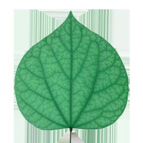Environnement